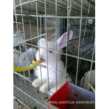 Pet rabbit cage in farm